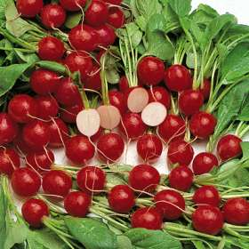 Radish effective against cancer